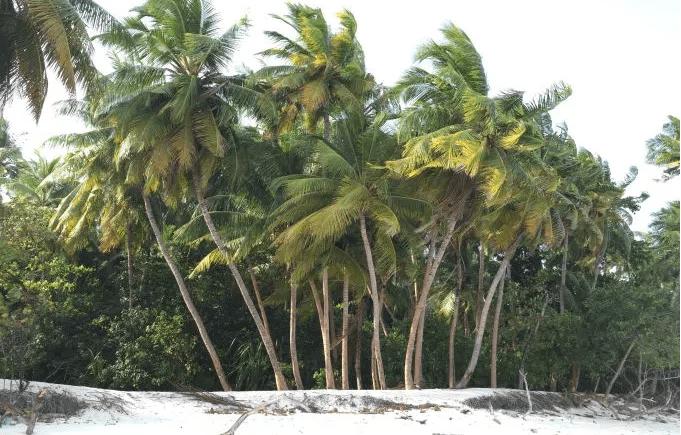 palmTreeWhiteSand.PNG