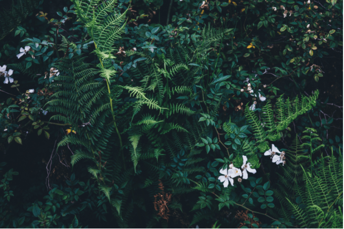greenFlowers.PNG