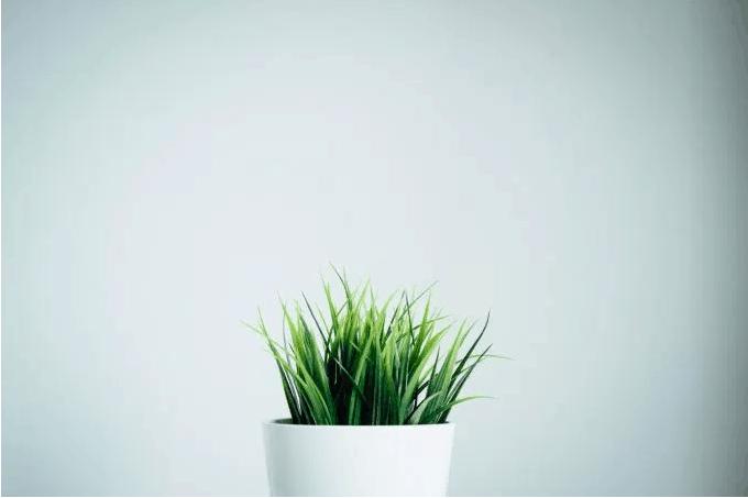 plantGrey.PNG
