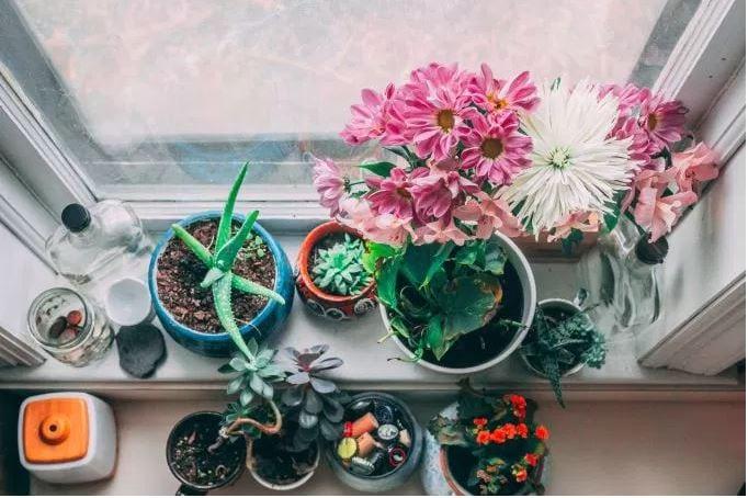 plantsWindow.JPG