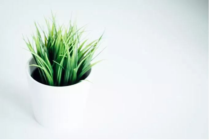 plantWhiteGreen.JPG