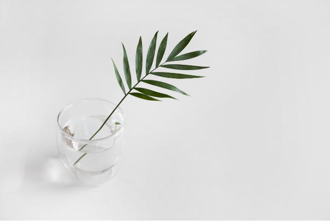 plantCupWhite2.JPG