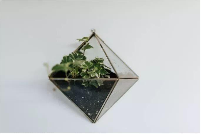 plantJar.JPG