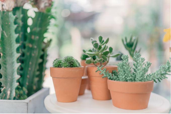 plantsPotted.JPG