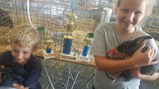 Winning rabbits