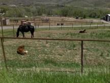 Foals near Masonville