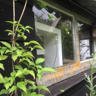 gouden mos op de vensterbank