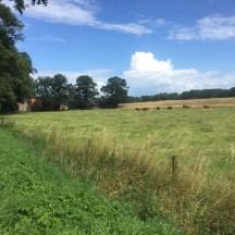 vee in de buurt van Dalfsen, Overijssel