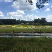 bloemen velden