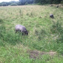 dieren in veld