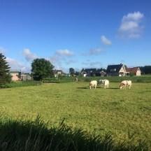 koeien en huizen Beemte Broekland, Gelderland
