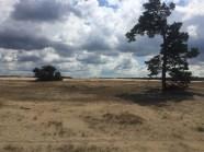 duin en een paar bomen in de Veluwe