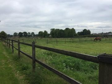paard velden
