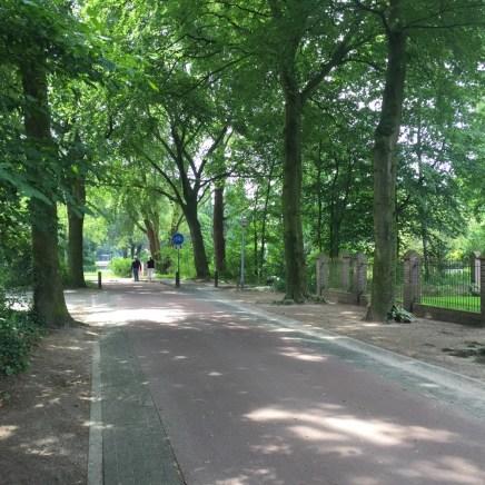 bomen langs fietspad