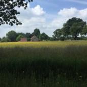 veld met gele een paarse wilde bloemen voor bomen en huis