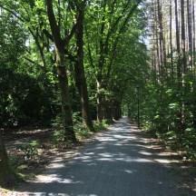 bomen langs pad