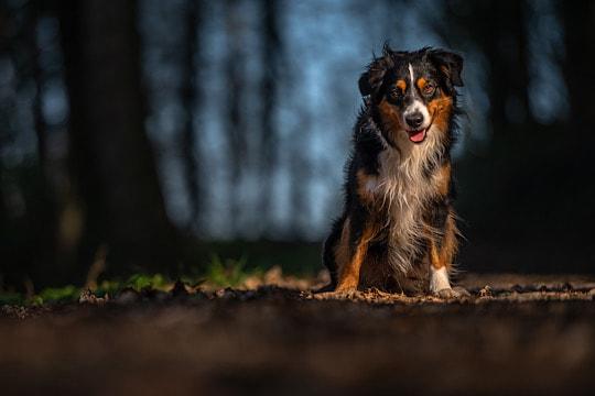 Hund mit vordergrund
