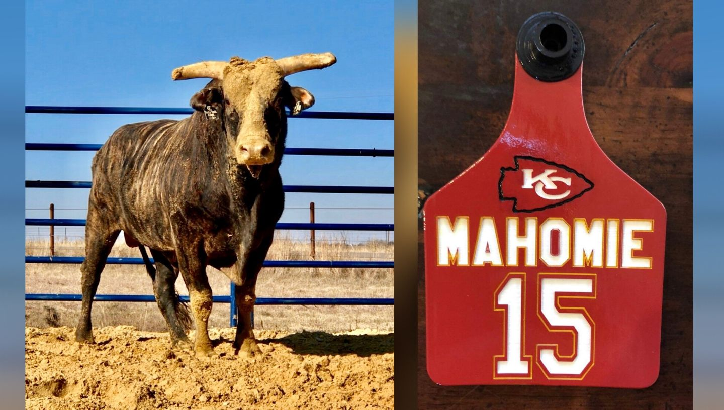 Mahomie the bull - Photos courtesy of PBR