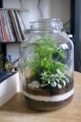 Terrarium-jungle urbaine
