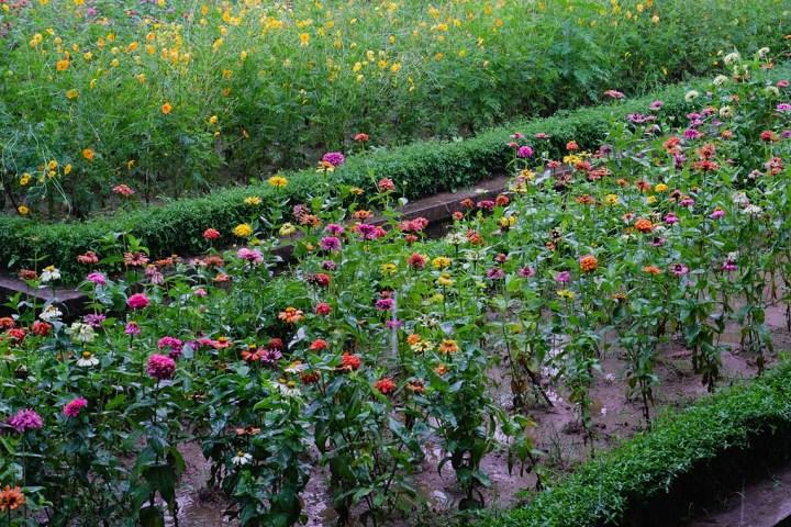 jardin de la cité interdite de Hué