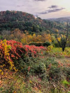 Couleurs d'automne sur la Corrèze
