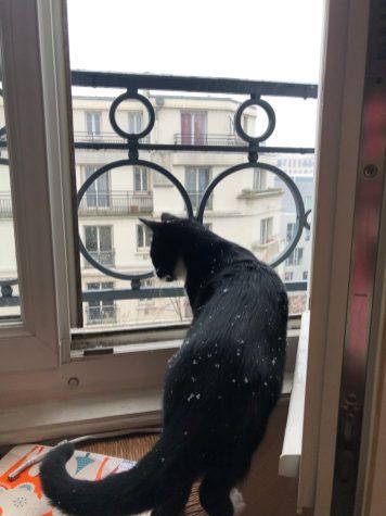 Pacha à la découverte de la neige à Paris