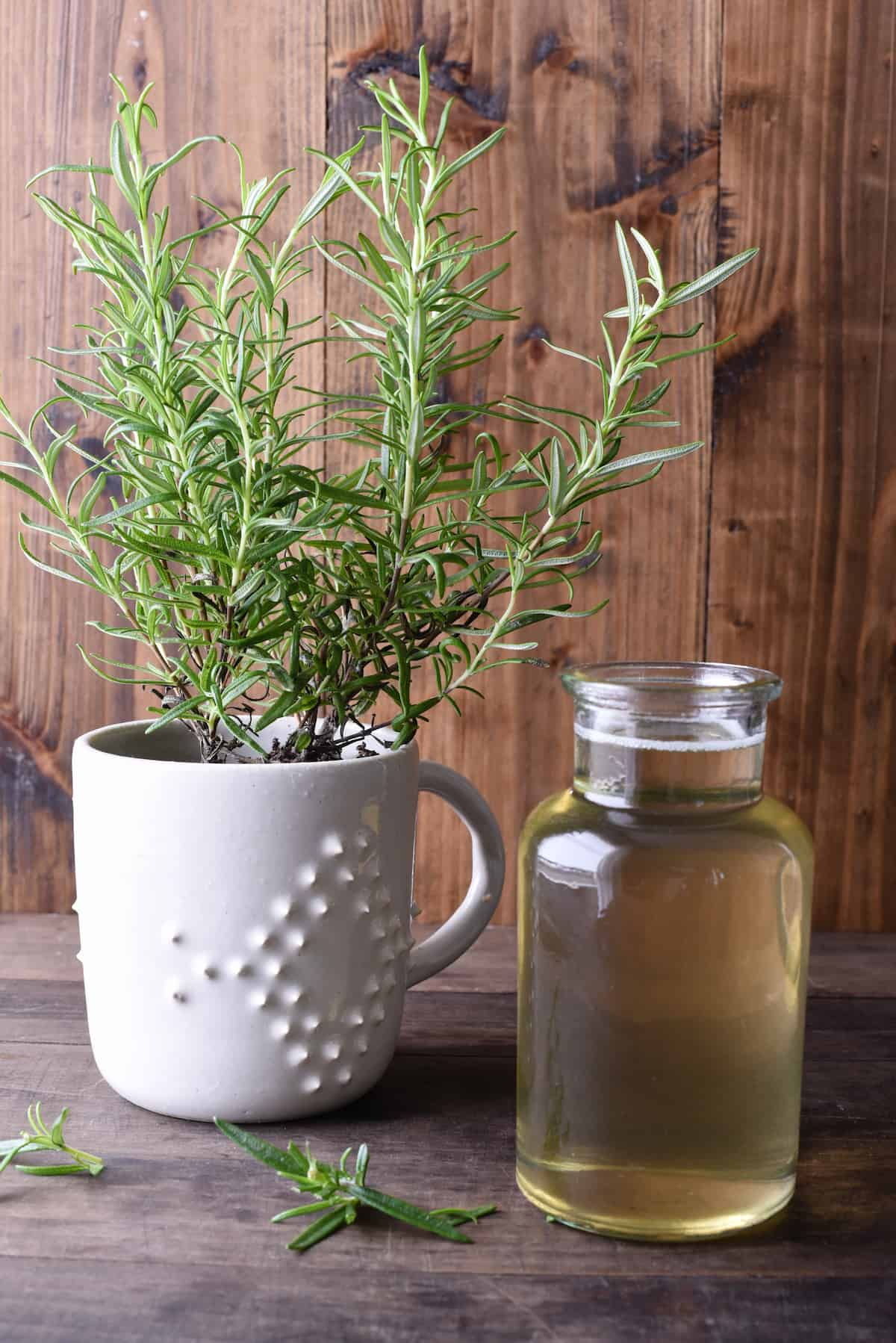 Small bottle of rosemary simple syrup and rosemary plant against wooden backdrop.