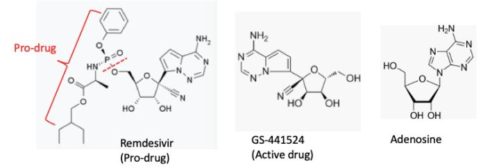 Remedesivir: an anti-dote to COVID-19