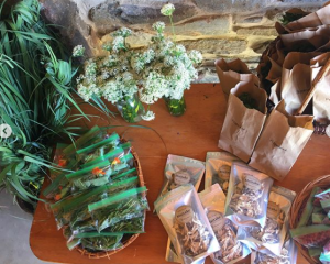 Fox Haven Farm Fresh Herb CSA Blooming-Fox-Haven forage local spring herbs wild edibles plant medicine Frederick MD herbalism education