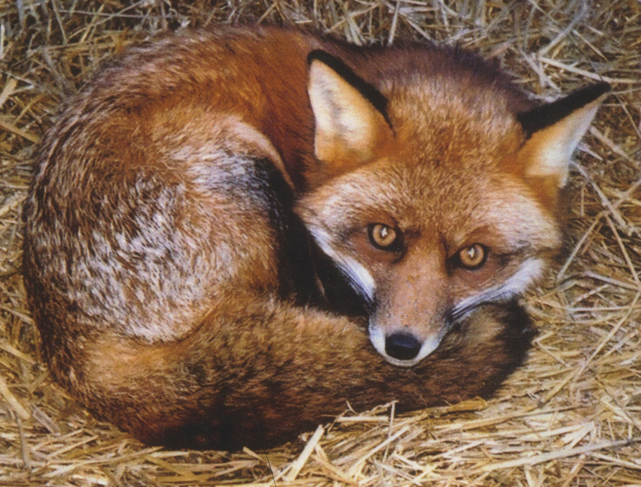 Fox Haven Farm
