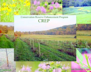 CREP-foxhaven-farm-Frederick-MD