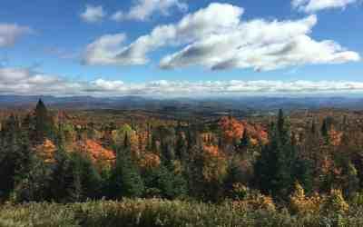 Fall Foliage Sale!