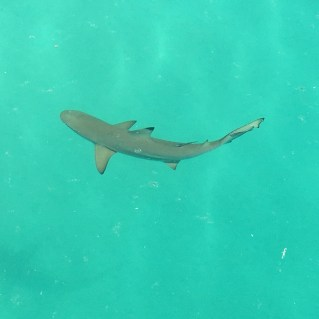 Sharks (not the human-eating kind)