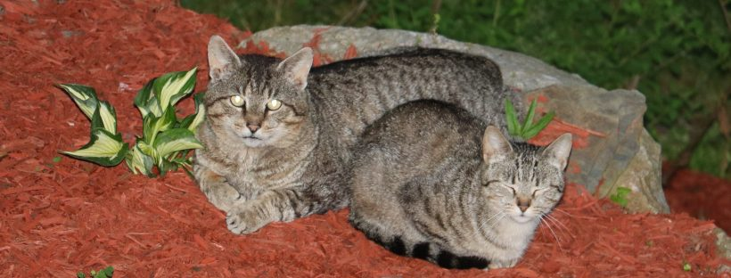 our feral cats