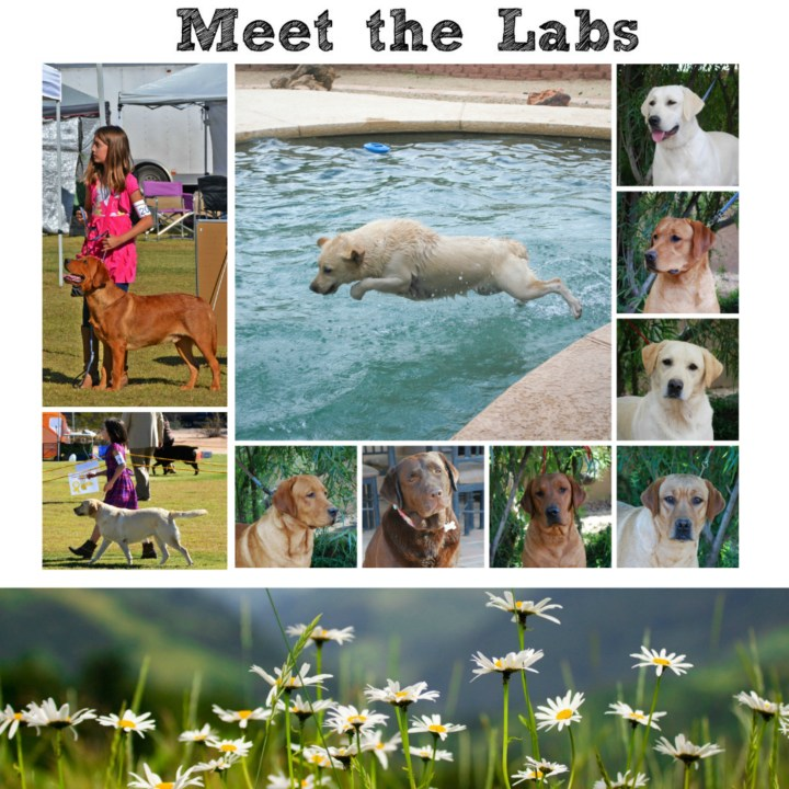 meet the labs3