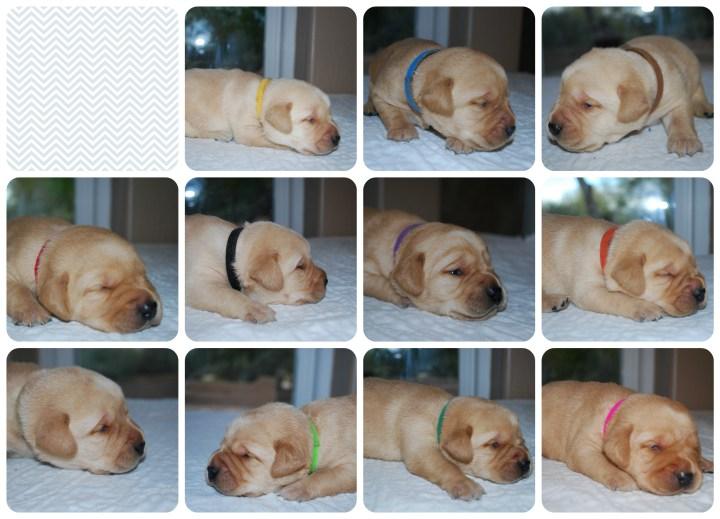 puppypics