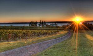 Sunrise over the vineyards