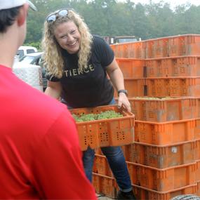Assistant Winemaker Lindsey VanKeuren picks up grapes