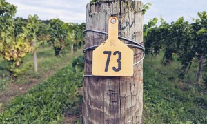 Close up of post in vineyard at Fox Run