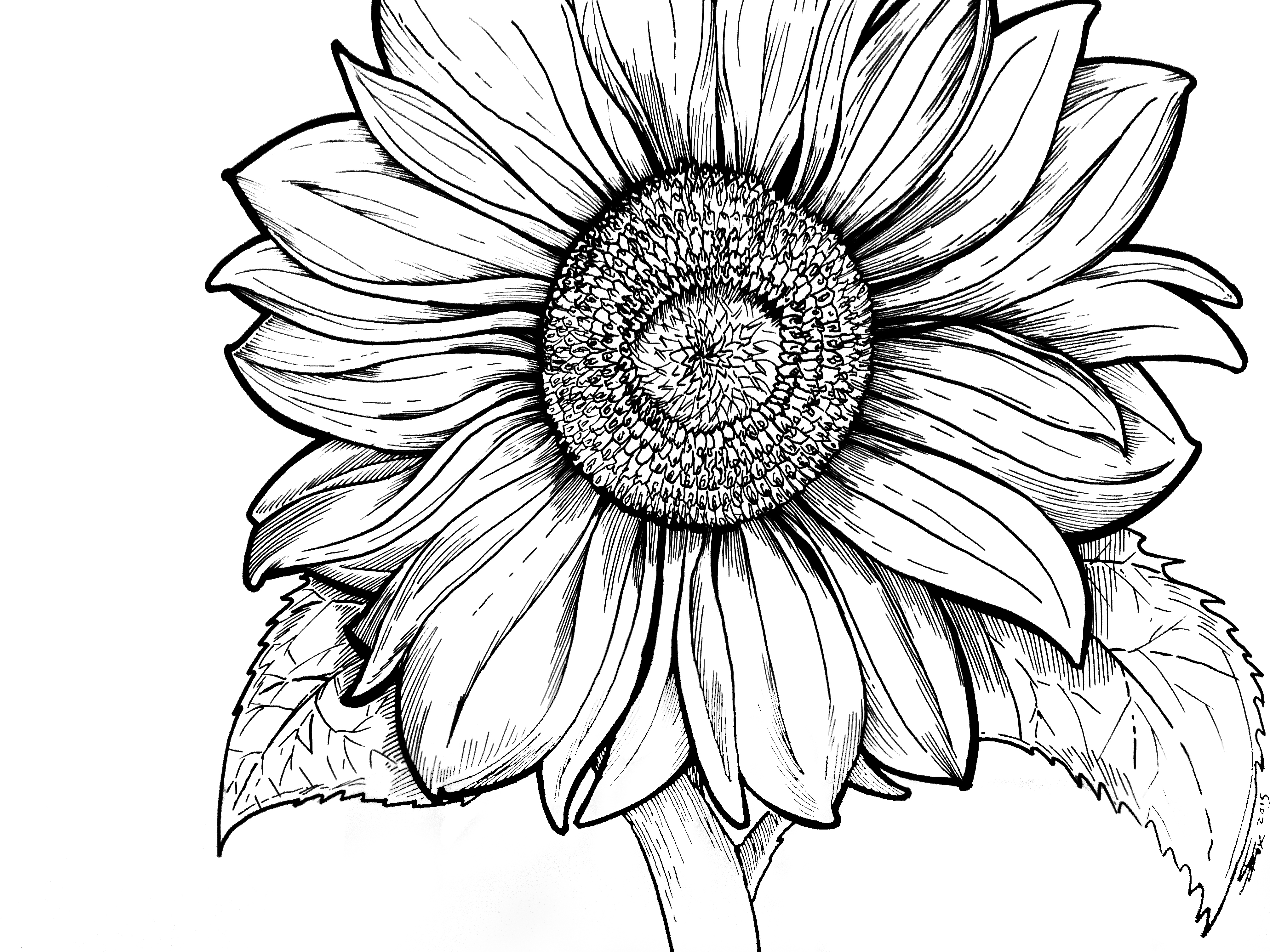 Sunflower Coloring Sheet - Coloring Sheets for Young Adults