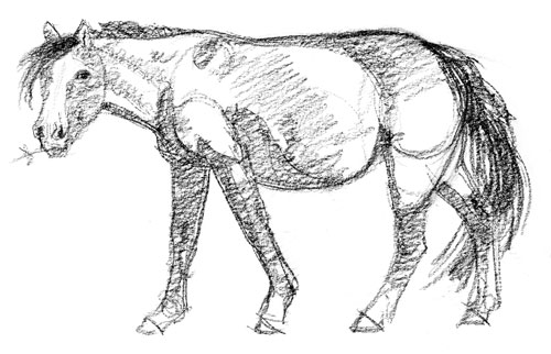 white-faced-horse