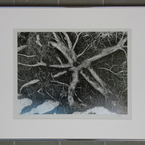 Bill_Woodley_Roots on Rock_gelatin silver print 3 of 25_2010_20x30x1 framed