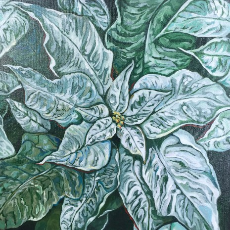 Elisabeth_Arbuckle_White_Poinsettia