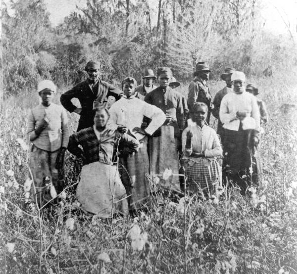 African-American workers in a cotton field.