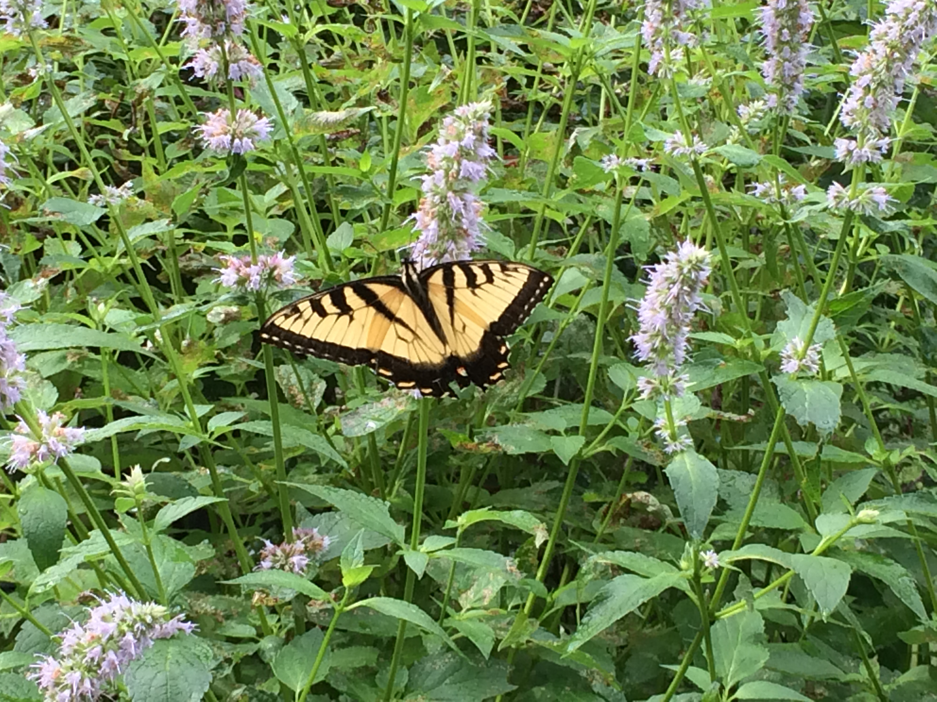 Some Of You May Have Enjoyed The Discussion And Tour Of The Churchu0027s Gardens,  Including The Butterfly Garden, Tended By Our U201cGardeners Of Edenu201d On July  10.