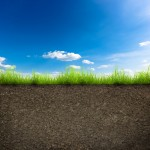 green grass with in soil over blue sky. Environment background