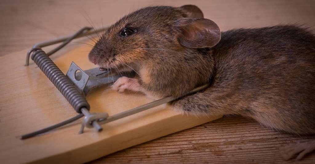 Quel que soit l'animal qui en est à l'origine, l'odeur de la mort est insupportable. © EinarStorsul, Pixabay, CC0 Public Domain