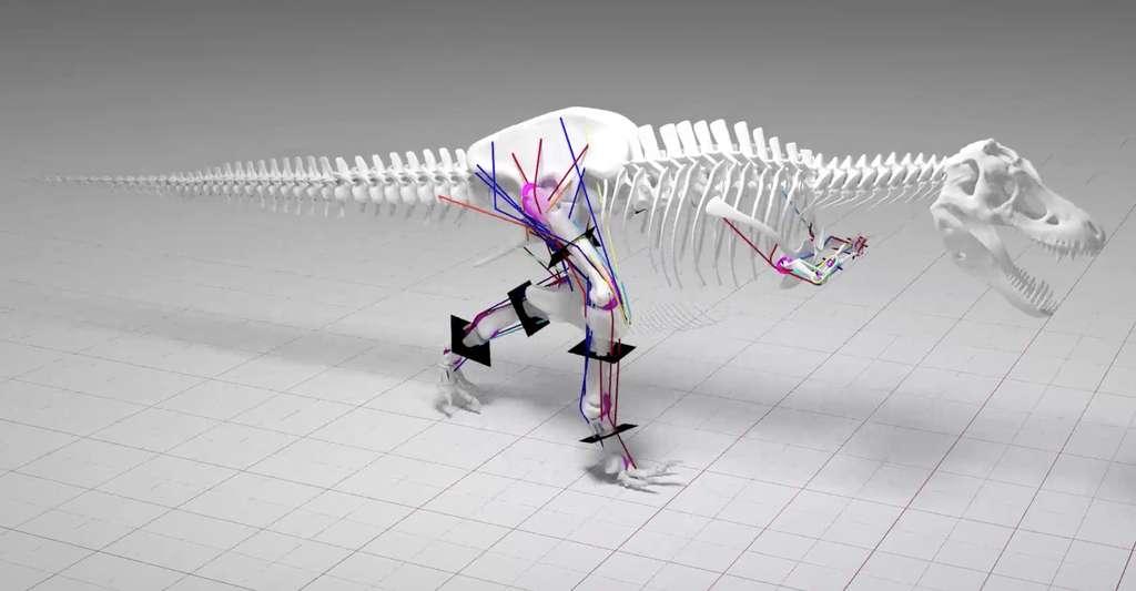 Le squelette du T-Rex n'était pas suffisamment résistant pour supporter une course rapide. © Université de Manchester