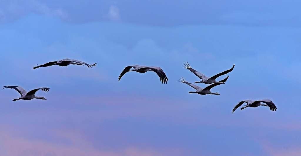 Tous les mystères du sommeil des oiseaux migrateurs n'ont pas encore été résolus par les scientifiques. © Georg_Wietschorke, Pixabay, CC0 Public Domain
