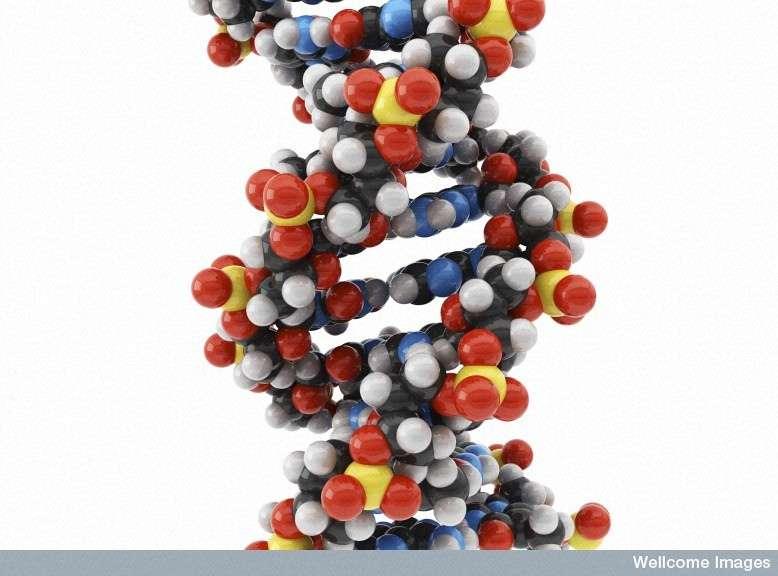 Le bonheur serait aussi codé dans l'ADN, en partie dans certaines formes du gène Maoa des femmes. Les hommes ont-ils eux aussi un équivalent ? © Maurizio de Angelis, Wellcome Images, Flickr, cc by nc nd 2.0